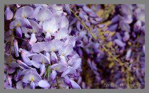 Purple by sadiyahjl10