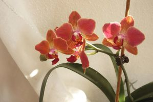 My own orchids 1 by steppelandstock