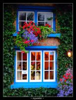 Adare window by tayanita