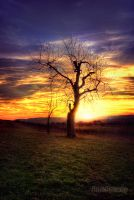 Tree at Sunset by RickPatway