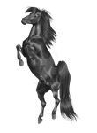 .:Greyscale for sale!:. by BlueMoonStables