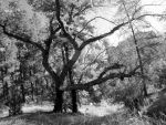 Branches by ShannasPhotos