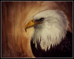 Bald Eagle by gilly15