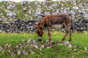 Rescue Donkey HDR by teslaextreme