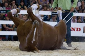 STOCK - Equitana 2013-128 by fillyrox