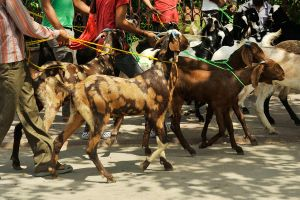 Goats to market 1 - Delhi by wildplaces