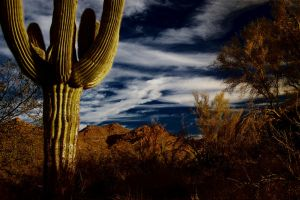 Arizona 2 by JCCJ756