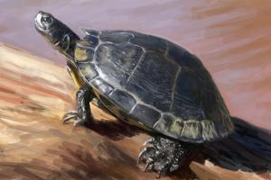 _turtle by dimodee