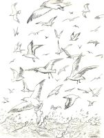 flock of Seagull gull mouettes by Bartok88