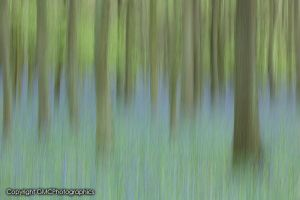Monet style Bluebells by GMCPhotographics
