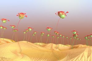 Desert flowers by janhein