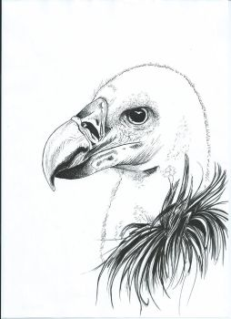 Vulture by Liaff
