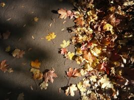 Autumn Leaves by martinemes