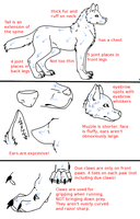 Wolf Anatomy Tutorial by PyroWolfDemon
