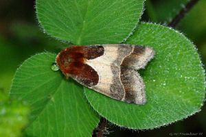 Cool little Moth by natureguy