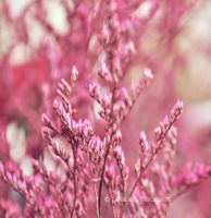 Pink Dream 1 by teresastreasures72