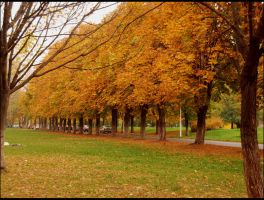 Autumn In Poli by stufff