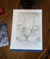 Cat face WIP by VengefulSpirits