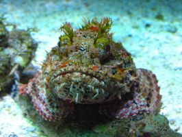 Stonefish by abuseofstock