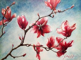 Magnolias 2 by NCEART