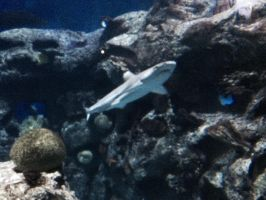 More Baby Shark by Wolfchick36