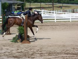 Horse show stock 8 by shush-stock