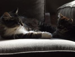 Meet Mittens and Rollo by Sweet-vicci