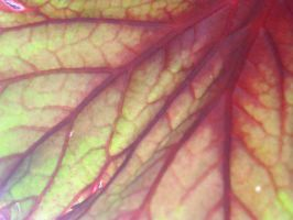 Colorful Veins by emr373stocks