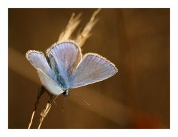 Blue wings II by Ernestine-SB