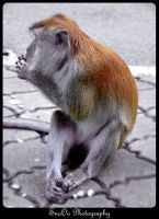 Monkey .. :D by nabed