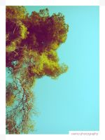 Blue Sky and Trees's Leaves 02 by Vianto