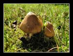 IMG 3898 Toadstools by CitizenOlek