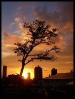 sunset tree II by tomegatherion