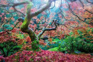 Portland | Japanese garden show yourself by alierturk