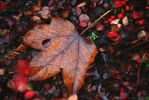 Colorful leaf by Anlin