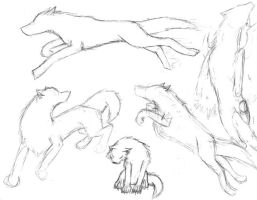 more wolf poses by NinjaCatWolf