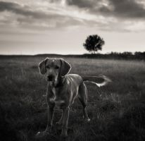 Dog,tree,sky... by denis2