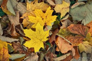 Autumn leaves by Zelma1