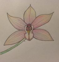 Pink Orchid Drawing by Amazinadrielle