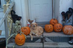 all my pumpkins and jollie by LillyMasacre