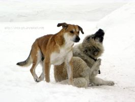 Dogs and snow. by VeIra-girl