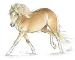 Doodle Haflinger by MightySquirrel