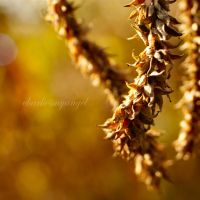 Beautiful November by charliesmyangel