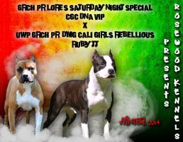 Rosewood Kennels Shooter X Ruby Breeding Ad by Destiny-Carter