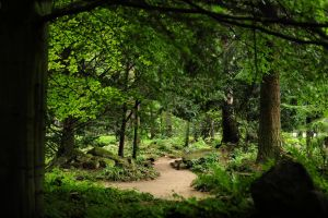 the forest corner by Wilithin