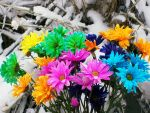 Rainbow Winter Daisies by LunarCrystal