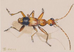 GROUND BEETLE............DAVIS II by DavisTheSecond