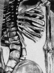 Skeleton Charcoal by LoneArtistGamer
