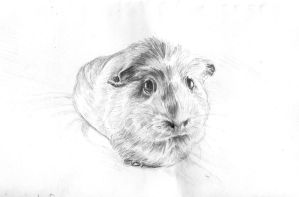Zoe the guinea pig by nienor