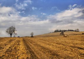 Autumn Field 10 by FrantisekSpurny